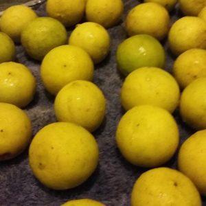 Limon criollo
